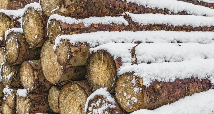Forsttagsatzung 2018